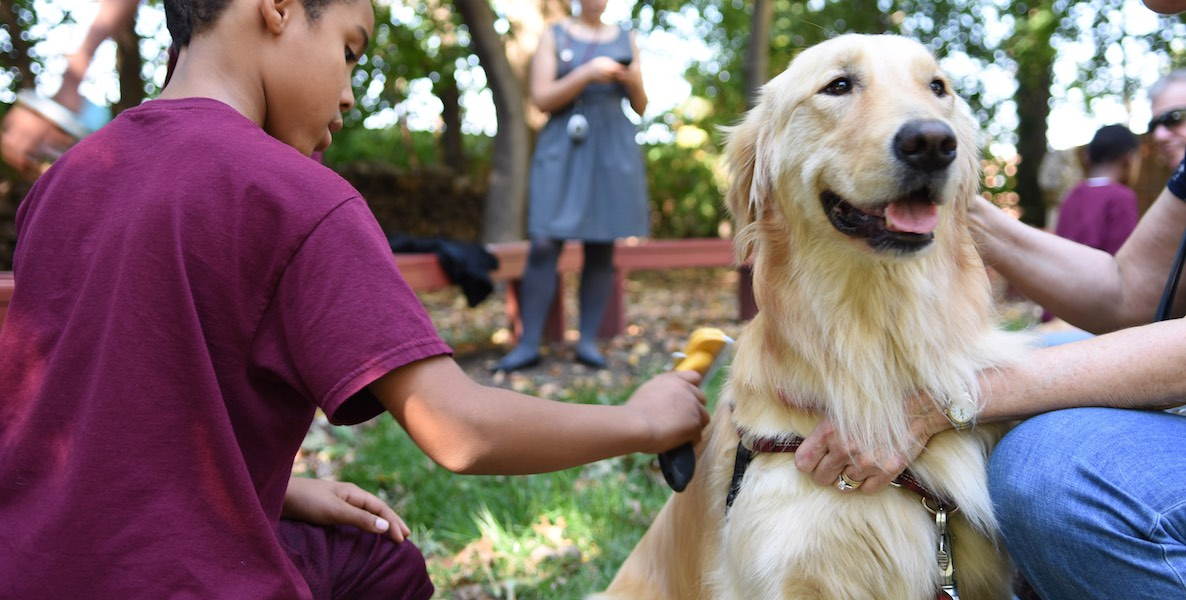 Therapy Dogs of Nellie's Schoolhouse